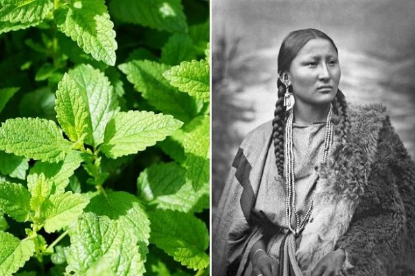 10 Medicinal Plants Native Americans Used To Cure Everything From Inflammation To Infections!